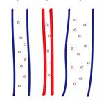 Flow-regulated lymphatic vasculature development and signaling
